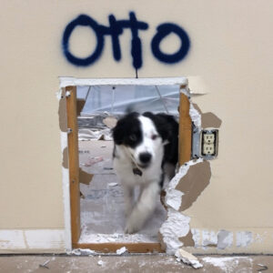 Otto the Maintenance Dog helping with the tear-down project